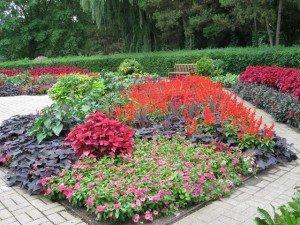 Red and Orange Texture Garden