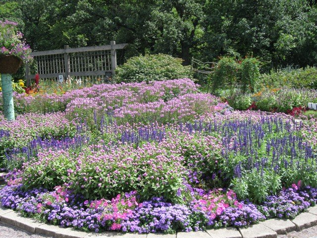 zone  gardening, zone  plants, and gardening advice for, Natural flower