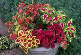 www.FlowerChick.com fall container gardening