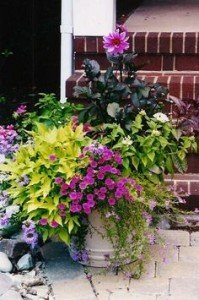 Container Garden Summer