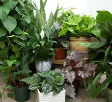 Houseplants by FlowerChick.com