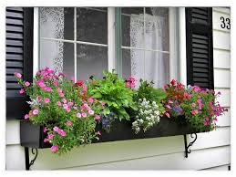 Annuals in Window Box