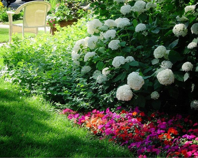Plants for shady areas for Garden trees for shade