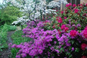 Shade Flowering Shrubs