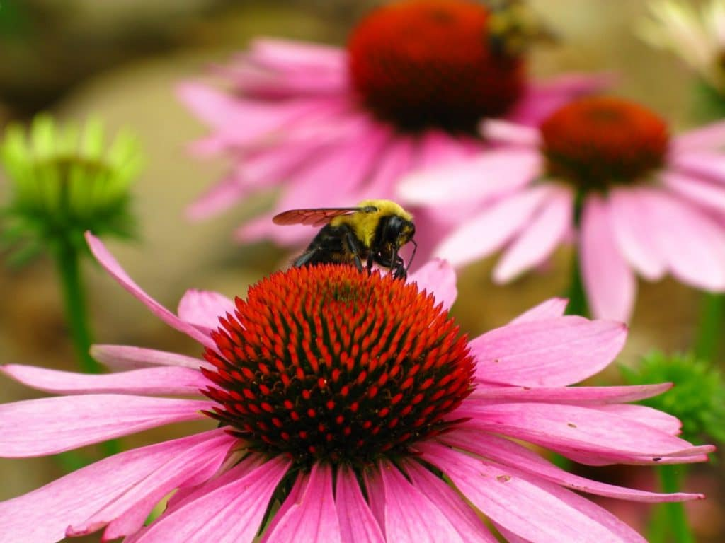 Creating a Bee Friendly Garden by FlowerChick.com