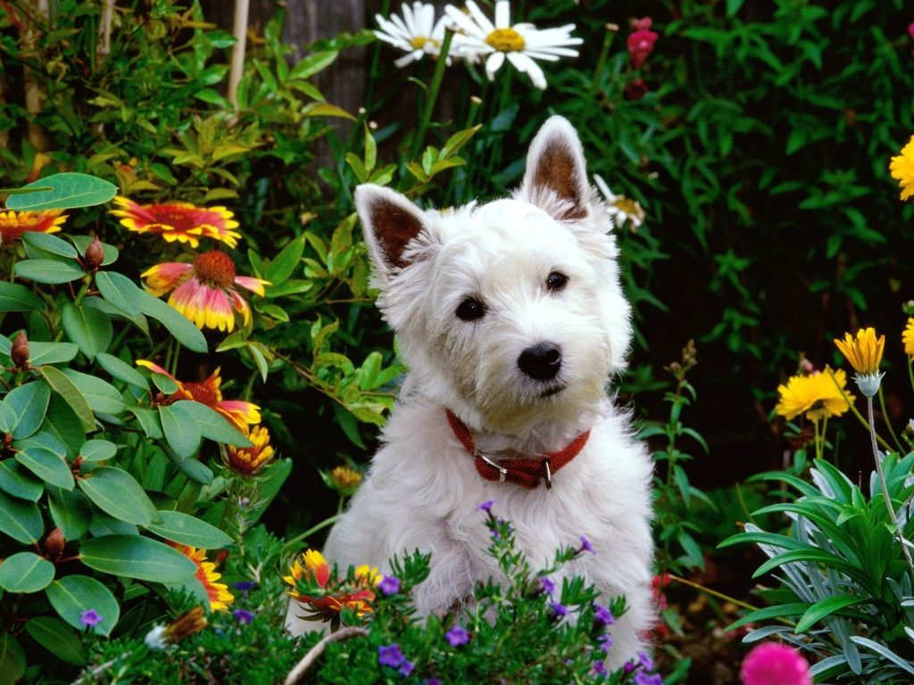 Dog Friendly Gardening By FlowerChick.com