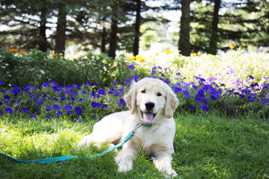Recommended Dog Friendly Plants For Yard by FlowerChick.com