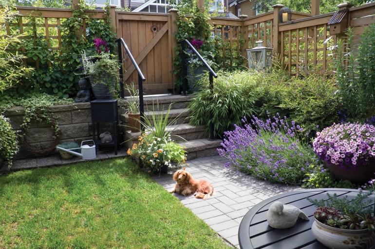 Dog Friiendly Yard by FlowerChick.com