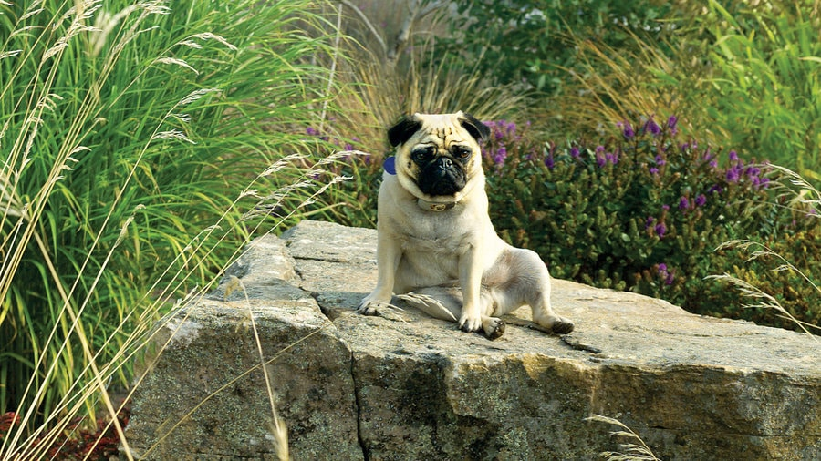 Creating a Dog Friendly Garden and Yard by FlowerChick.com
