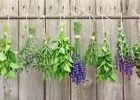Freezing and Drying Herbs by FlowerChick.com