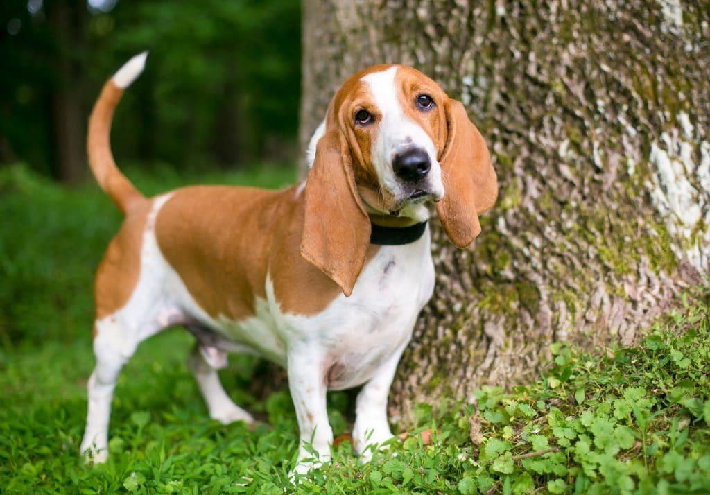 Traits of a Dog Friendly Garden by FlowerChick.com