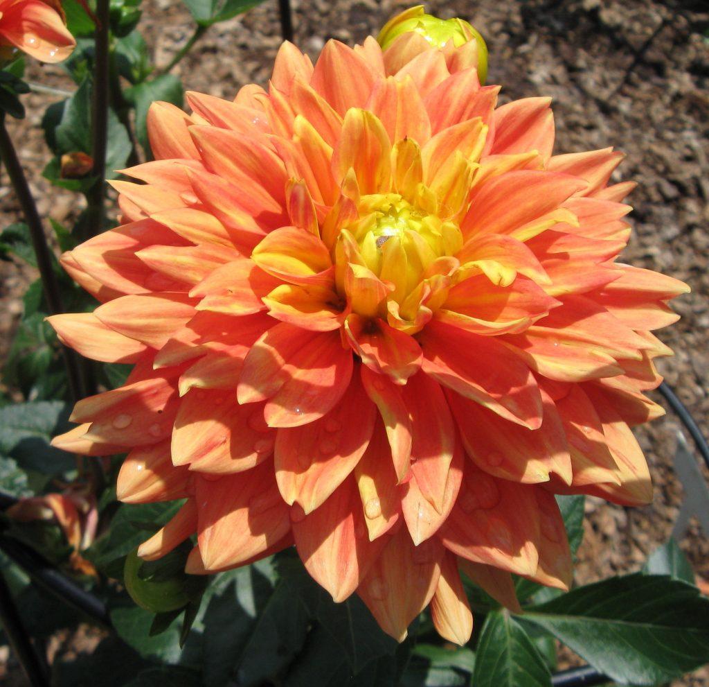 Visit Dubuque Iowa by FlowerChick.com