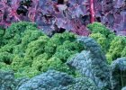 Kale varieties by FlowerChick.com