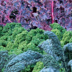 Kale varieties by FlowerChick.com