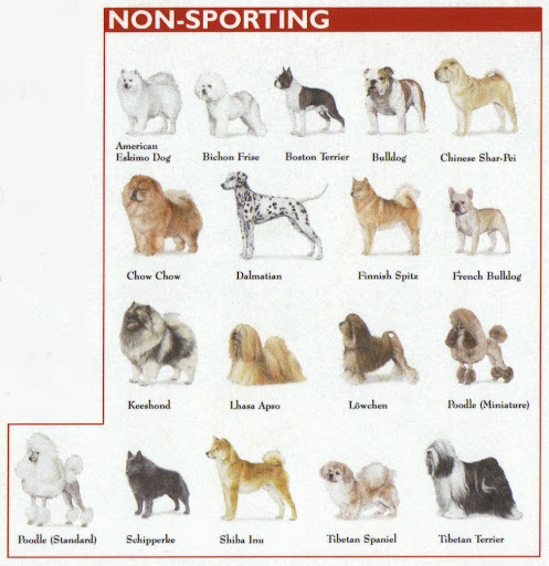 Conside Dog Traits When Planning Your Garden by FlowerChick.com