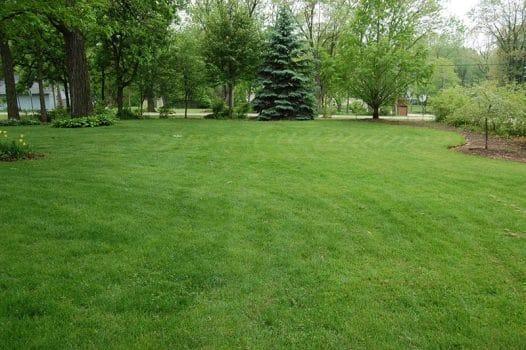 8 Organic Gardening Tips by FlowerChick.com