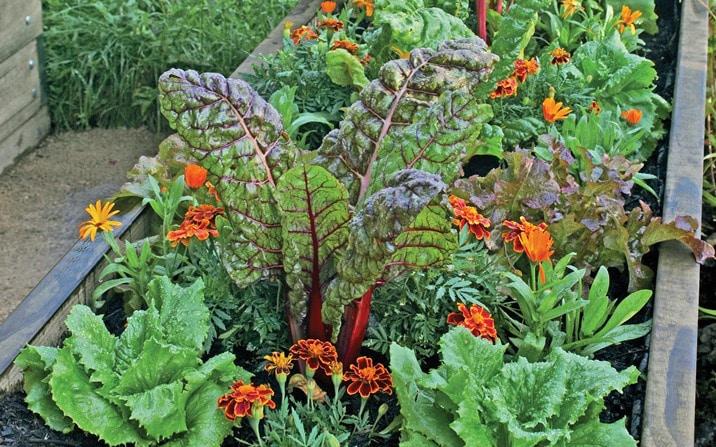 Organic Gardening by FlowerChick.com