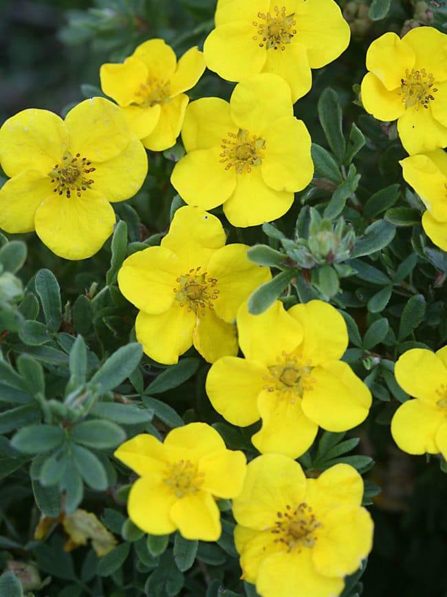 perennials for zone 5 by FlowerChick.com