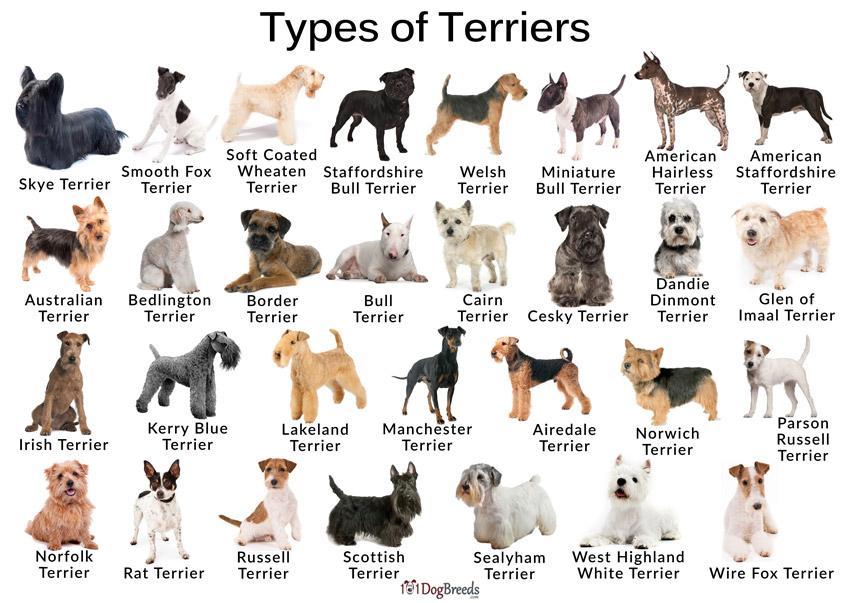 Dog Traits by FlowerChick.com