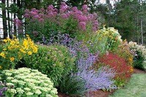Statuesque Perennials For Zone 5 & 6