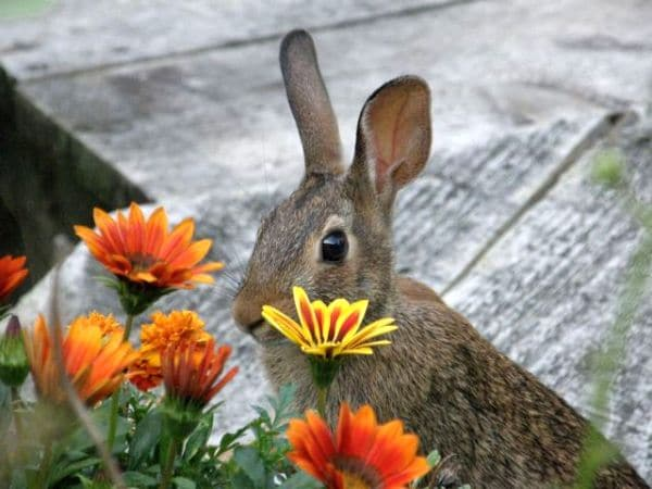 Rabbit Proof Your Garden by Flower Chick