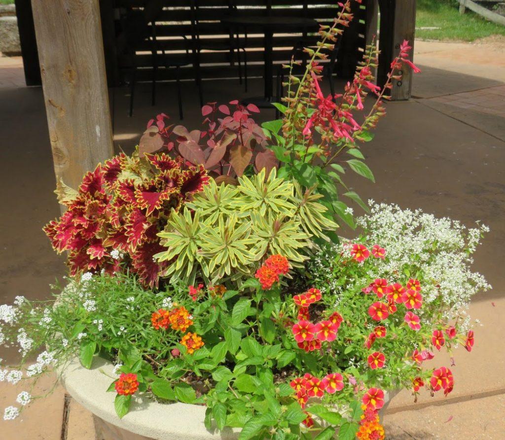 Container Garden Color by FlowerChick.com