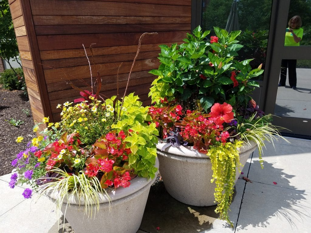 Container Gardening by Flower Chick