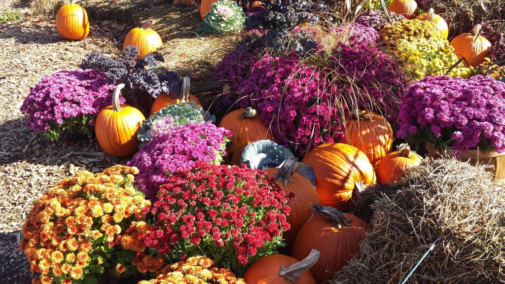 Fall Feeling by FlowerChick.com