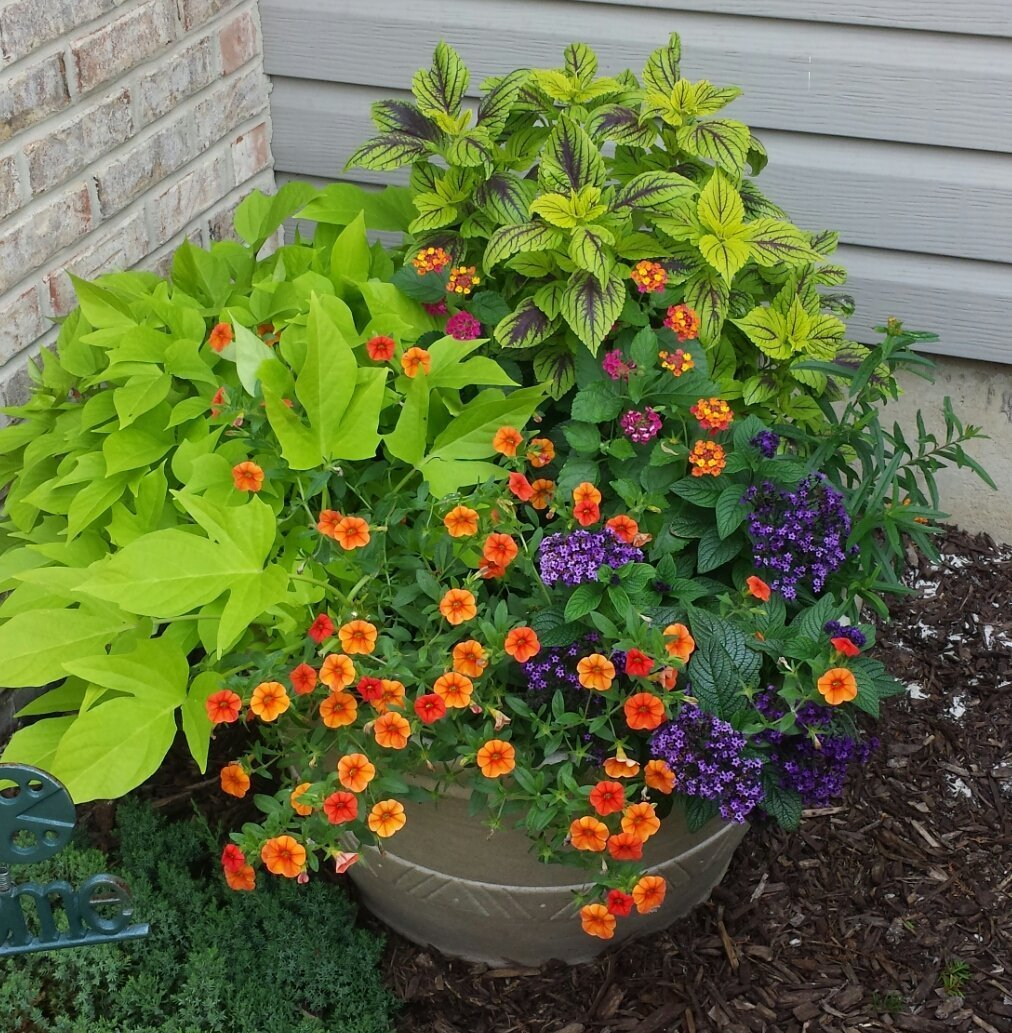 Container Gardening Combinations