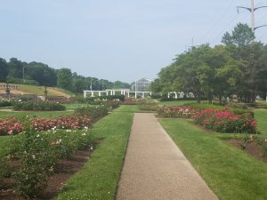 Sinissippi Rose Garden Rockford by Flower Chick