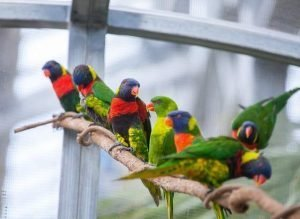 Lorikeet Exhibit at Nicholas Conservatory by Flower Chick