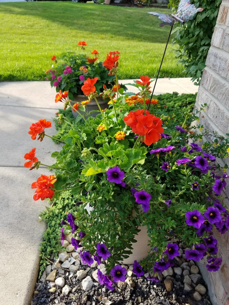 Flower Chick container gardening combinations