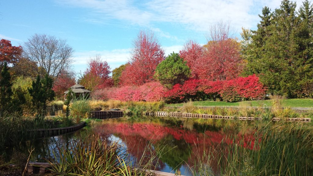 Fall at Cantigny by Flower Chick