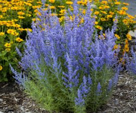 Tall perennials for zone 5 by Flower Chick