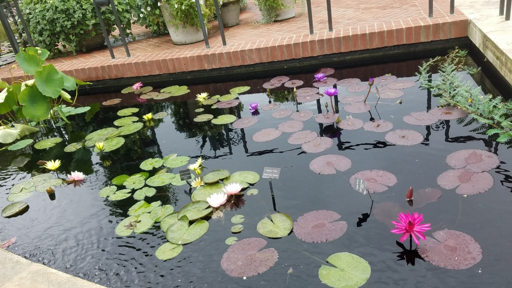 The Aquatic Garden at Chicago Botanic Garden by FlowerChick.com