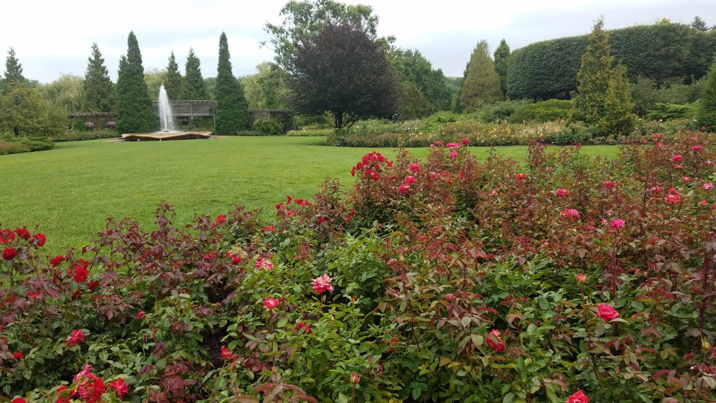 Rose GArden at Chicago Botanic Garden by Flowerchick.com