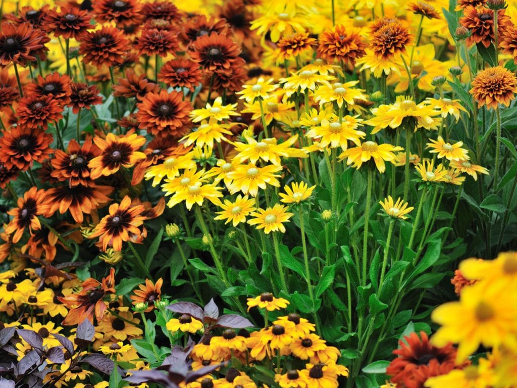 Fall Color With Hardy Perennials by FlwoerChick.som