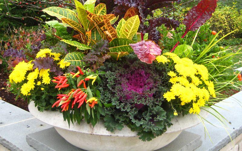 Fall Container Gardens by FlowerChick.com