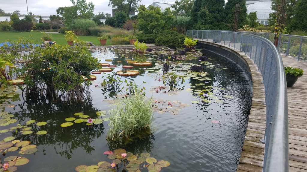 Aquatic City Garden at Garfield Park by FlowerChick.com