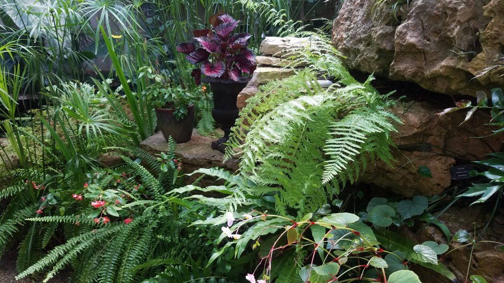 Fern Conservatory at Fernwood by FlowerChick.com
