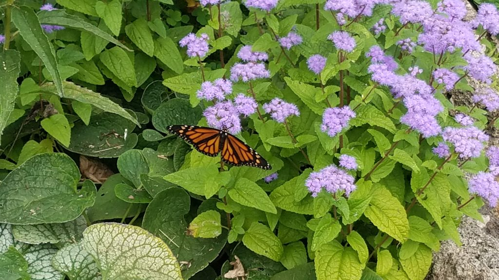 Butterfly Garden at Friendship Botanic Garden in Michigan City by FlowerChick.comGardens