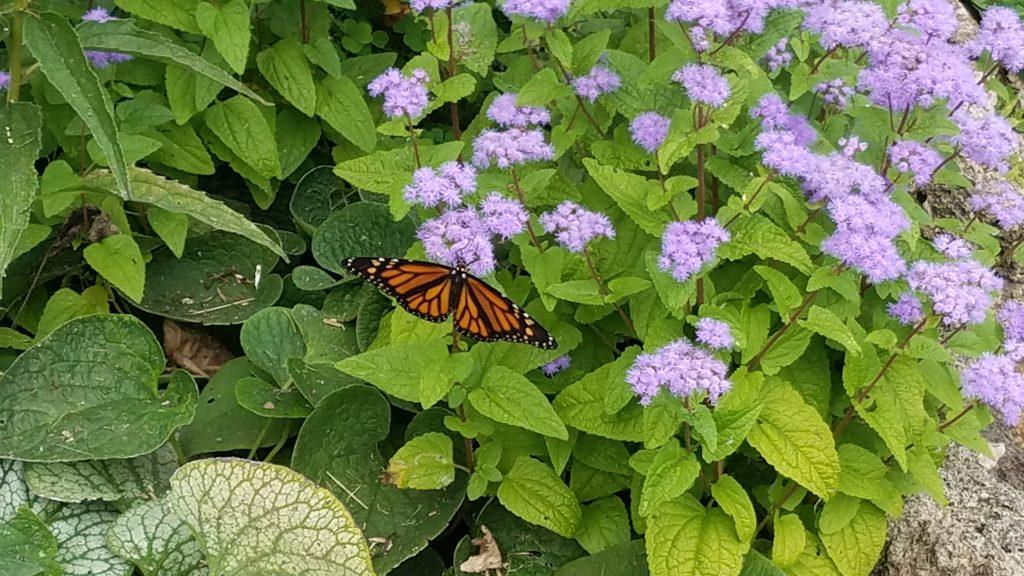 Butterfly Garden at Friendship Botanic Garden in Michigan City by FlowerChick.comGardens