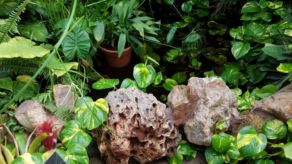 Tropical Plants in the Luthy Conservatory by FlowerChick.com