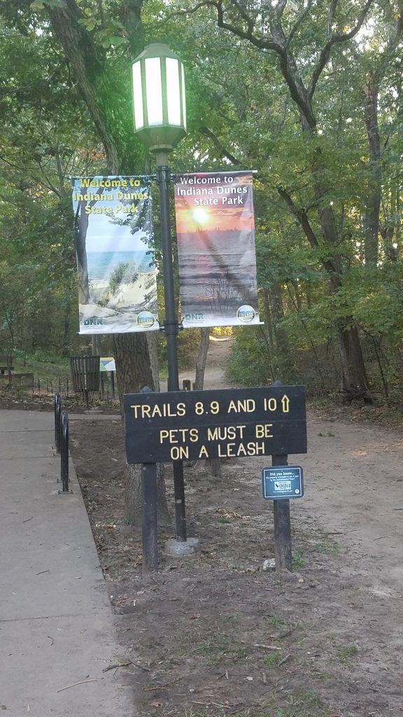 Indiana Dunes State Park Trails by FlowerChick.com