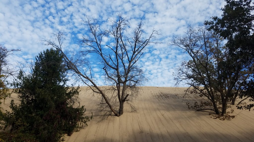 Mt. Baldy Indiana Dunes by FlowerChick.com