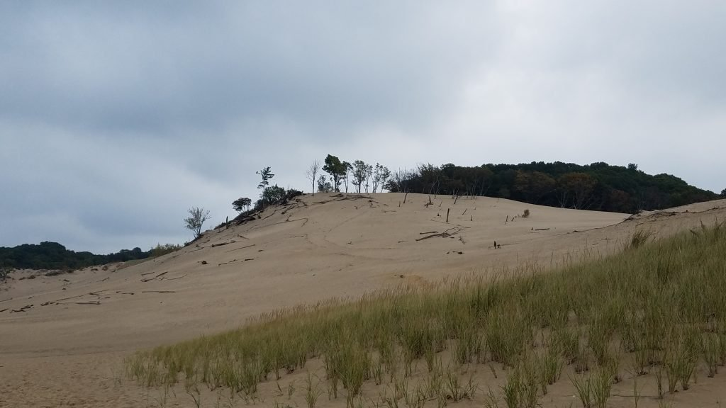 Warren Dunes by FlowerChick.com