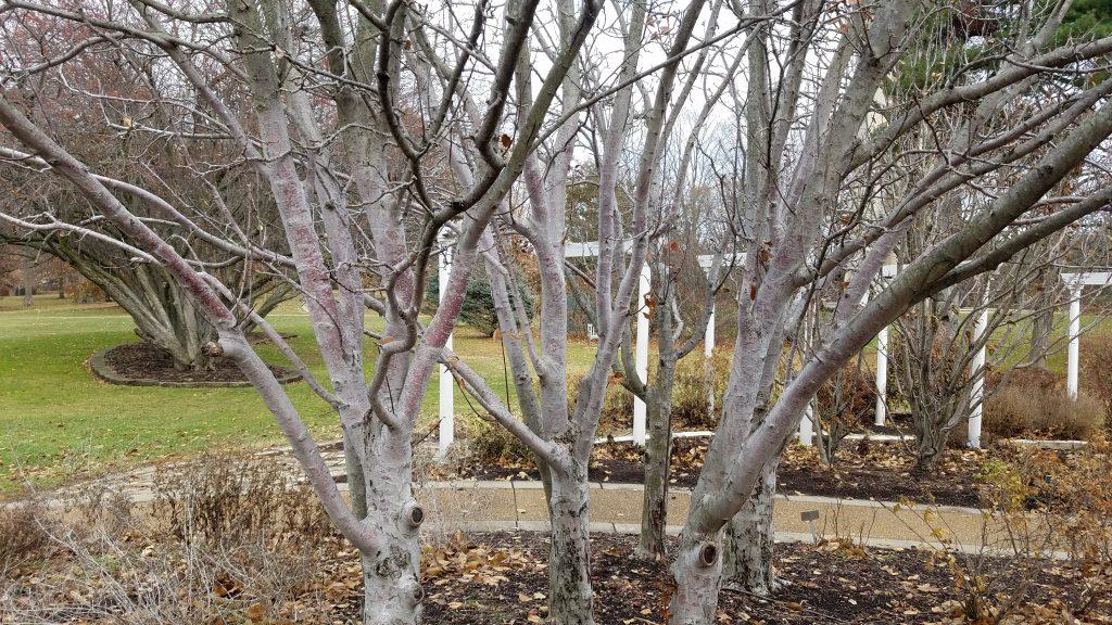 Tree 'Bones' - Autumn in Washington Park Botanical Garden by FlowerChick.com
