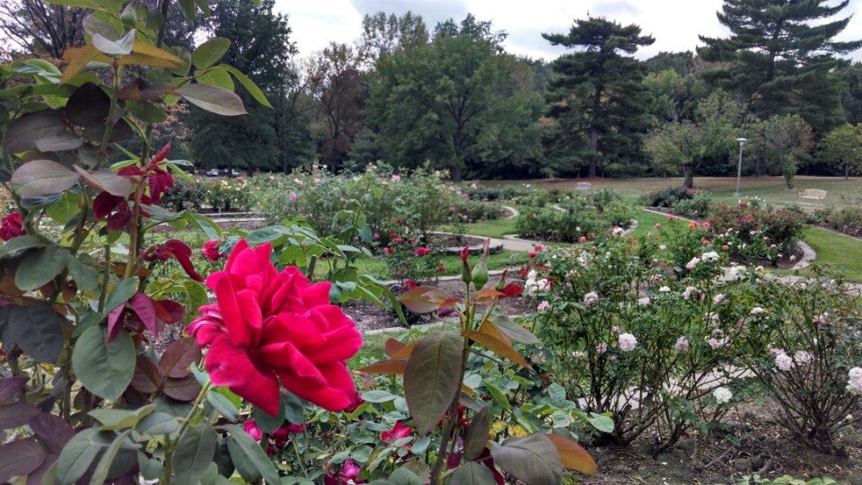 The Rose Garden in Washington Park Springfield IL