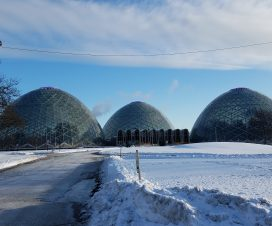 The Domes in Milwaukee by FlowerChick.com