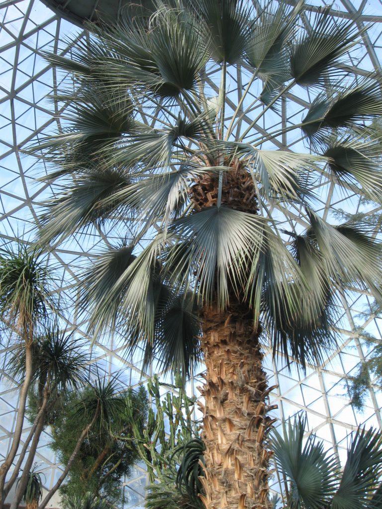 Tropical Dome Milwaukee by FlowerChick.com